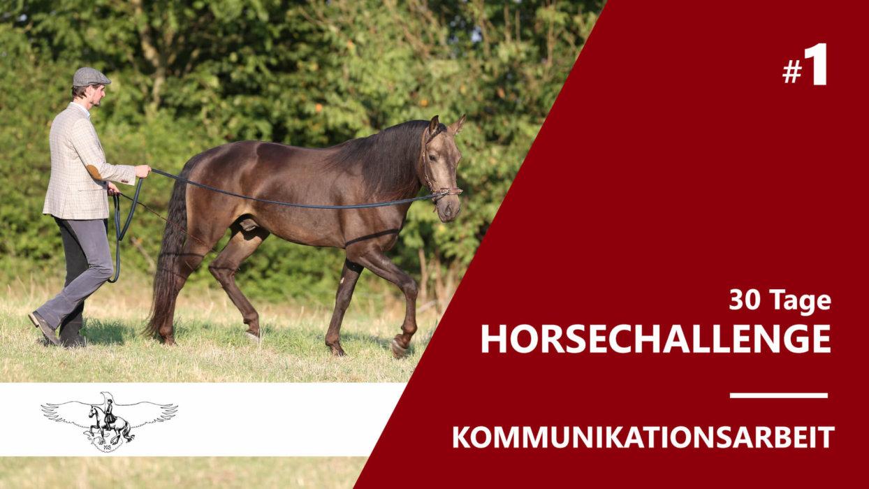 30 Tage Horse Challenge – Kommunikationsarbeit durch Führarbeit