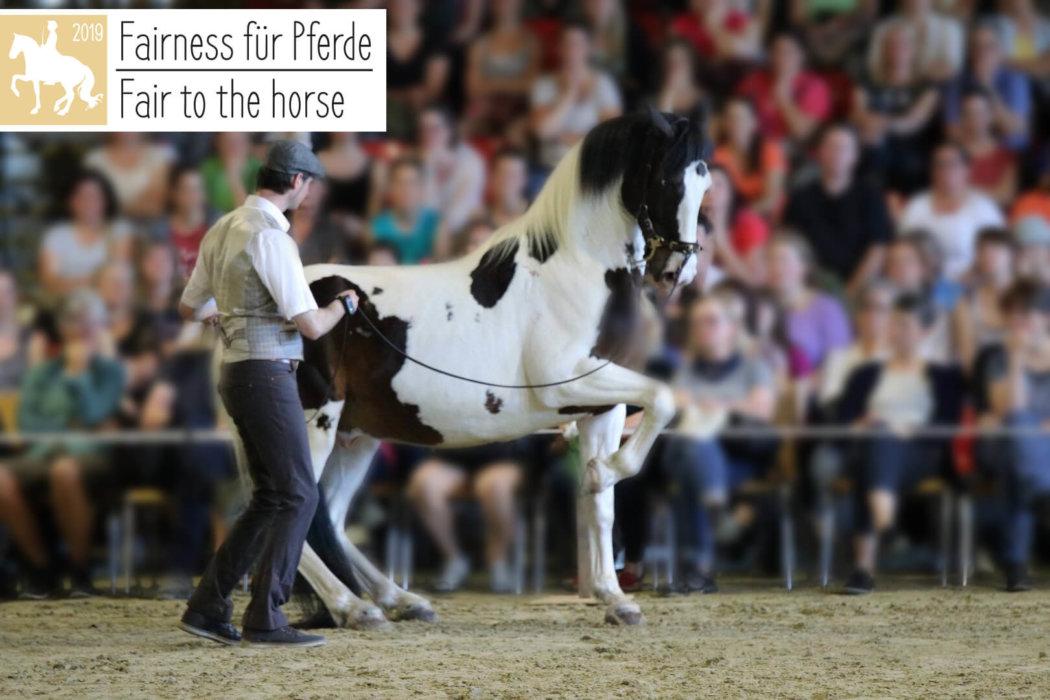 Fairness für Pferde – 2019